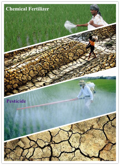 soil degradation caused by chemical fertilizer and preticide