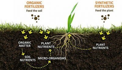 fertilizer affecting plant growth