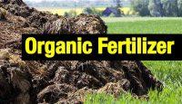 organic fertilizer production process