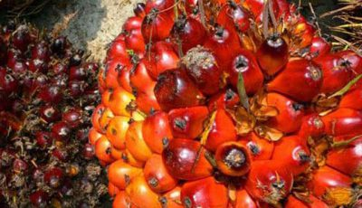 palm oil waste organic fertilizer production technology