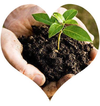 organic bio compost